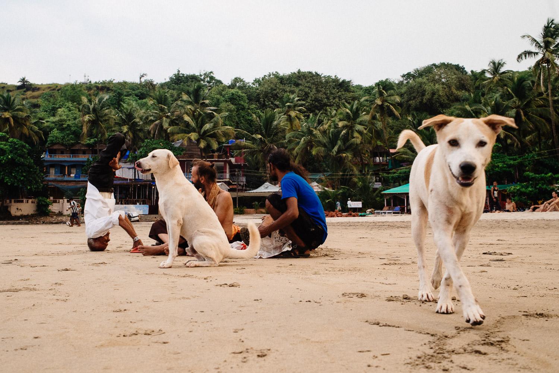 Arambol Goa beach plaża